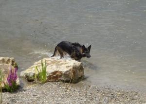 Nach Meinung der Freien Wähler sollen Hunde nicht am neuen Sandstrand, sondern an anderen Stellen im Neckar baden