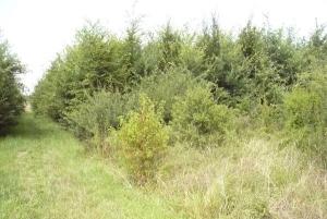 Der klassische Aufbau eines Waldrandes ist im Regental nach sieben Jahren bereits zu erkennen